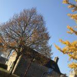 Image de Ville de Saint-Avé