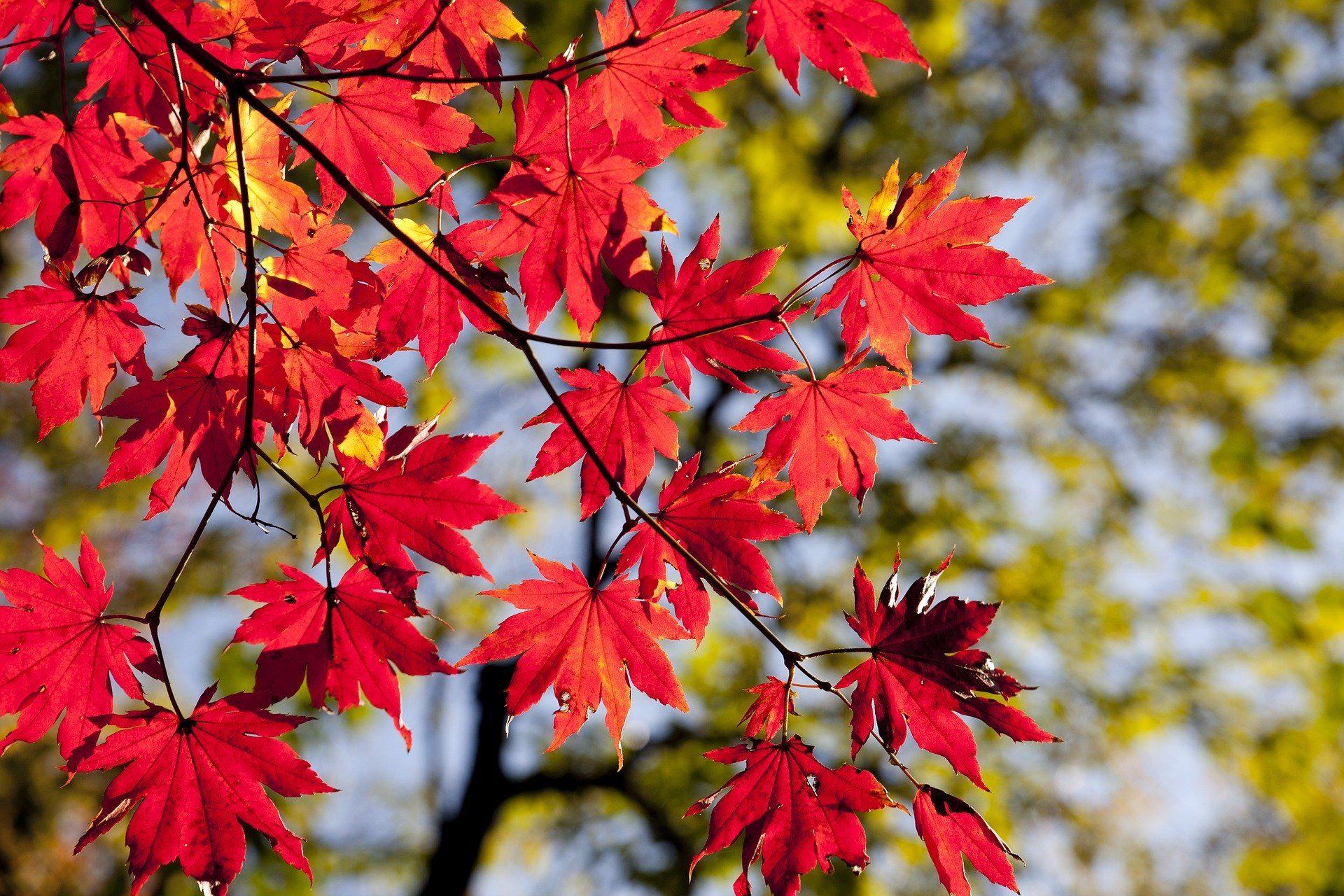 autumn-leaves-2789234_1920